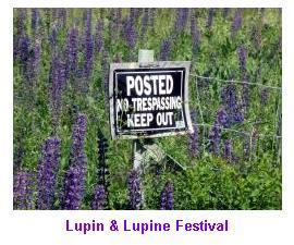 Sugar Hill Lupine Festival Gallery